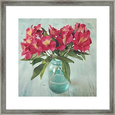 Red Astramaris Flowers Framed Print by Kay Pickens