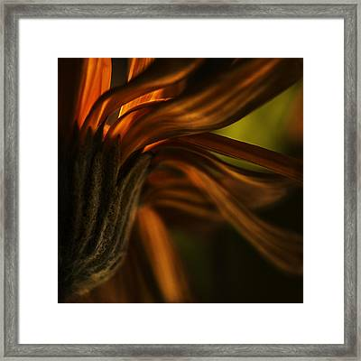 Framed Print featuring the photograph Red Autumn Blossom Detail by Peter v Quenter