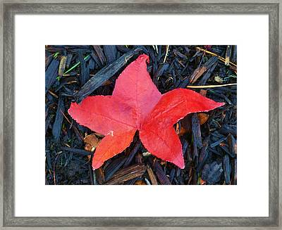 Red Autumn Leaf Framed Print