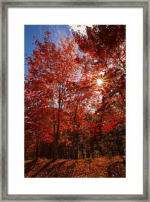 Framed Print featuring the photograph Red Autumn Leaves by Jerry Cowart