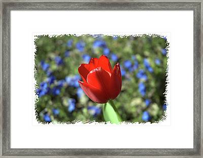 Red Baby Framed Print by Arthur Fix