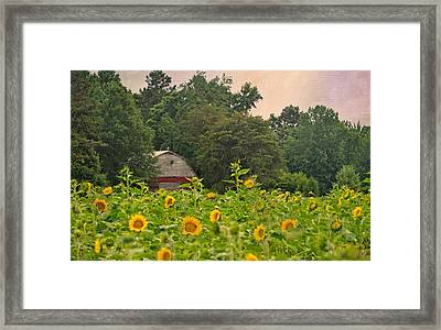 Red Barn Among The Sunflowers Framed Print by Sandi OReilly