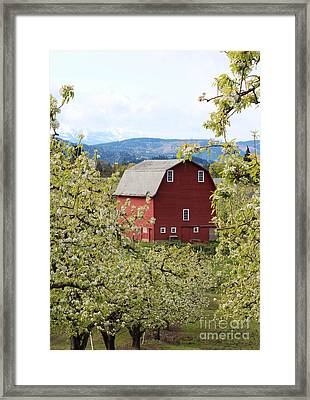 Framed Print featuring the photograph Red Barn And Apple Blossoms by Patricia Babbitt