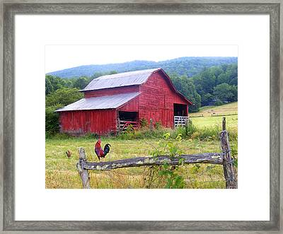 Red Barn And Rooster Framed Print