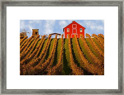 Red Barn In Autumn Vineyards Framed Print