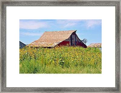 Red Barn In Summer Framed Print