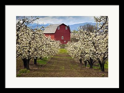 Orchard Photographs Framed Prints
