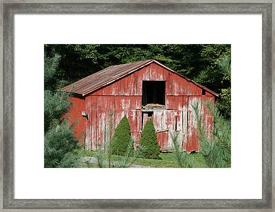 Red Barn Two Trees Framed Print by Paulette Maffucci