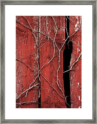 Framed Print featuring the photograph Red Barn Wood With Dried Vines by Rebecca Sherman