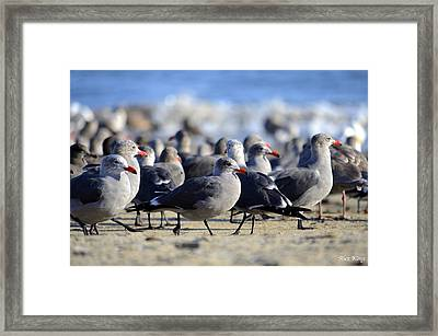 Red Beak Seagull Convention Framed Print by Alex King