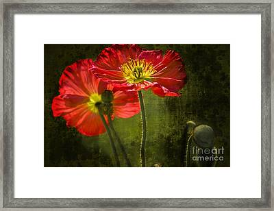 Red Beauties In The Field Framed Print by Heiko Koehrer-Wagner