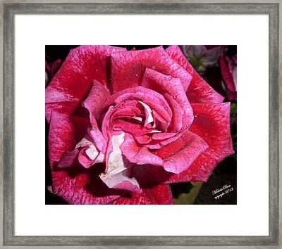 Red Beauty 2  Framed Print