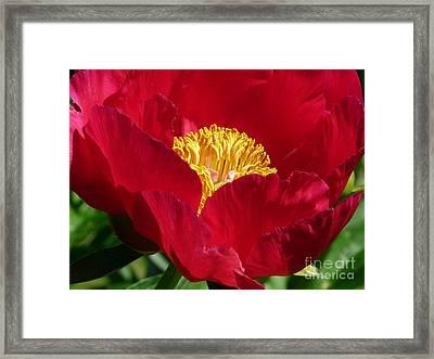 Red Beauty Framed Print by Avis  Noelle