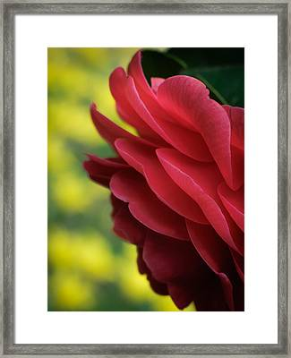 Red Beauty Framed Print by James Barber