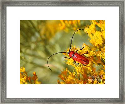 Red Beetle Framed Print by Marty Fancy