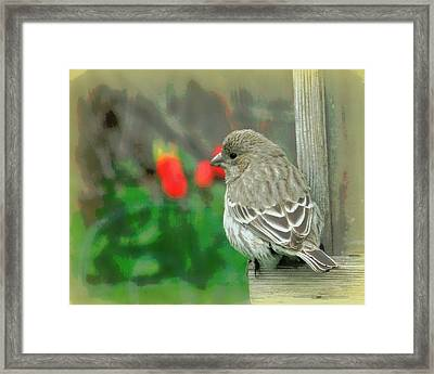 Red Behind Little Beak Framed Print by Heidi Manly