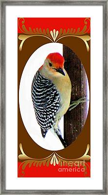 Framed Print featuring the photograph Red-bellied Woodpecker Framed by Janette Boyd