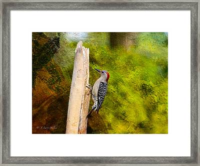 Red-bellied Woodpecker Happily Pecks Framed Print