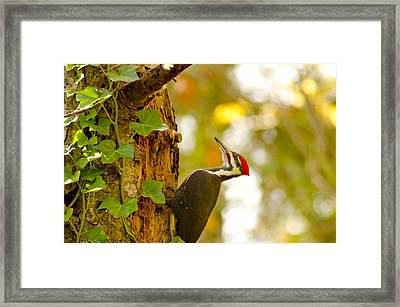Red Beret Framed Print by Robert Holmberg