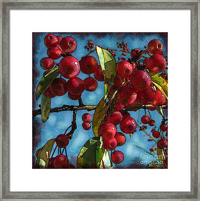Red Berries Framed Print by Colleen Kammerer