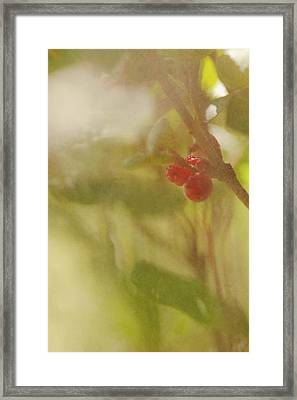 Red Berries Of The Bog Cranberry Framed Print by Roberta Murray