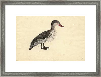 Red-billed Duck Framed Print by Natural History Museum, London