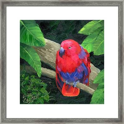 Red Bird Framed Print by Alice Leggett