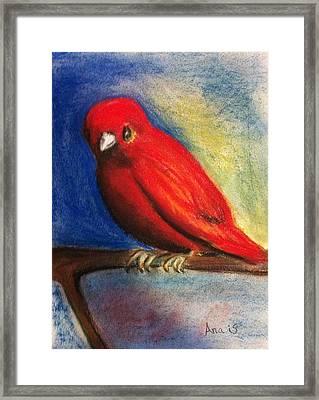 Red Bird Framed Print by Anais DelaVega