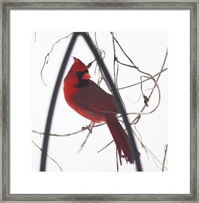 Red Bird On A Vine Original Framed Print