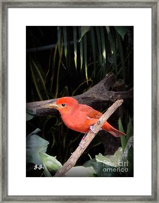 Red Bird Pose Framed Print