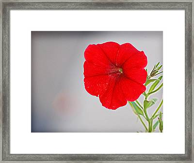 Framed Print featuring the photograph Red Blossom by Linda Brown