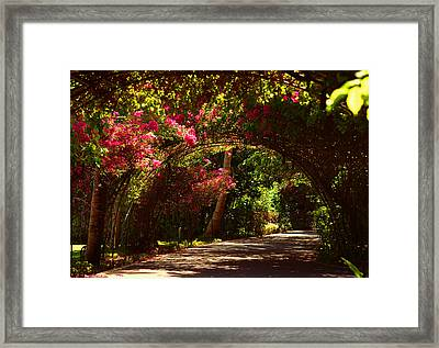 Red Bougainvillea Passage. Sun Island Resort. Maldives Framed Print by Jenny Rainbow