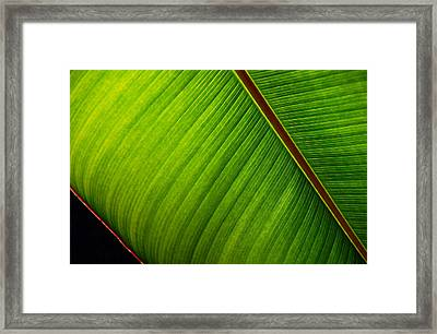 Red Bound Framed Print by Lorenzo Cassina