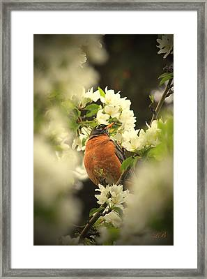 Red Breasted Beauty Framed Print by Laura Bentley