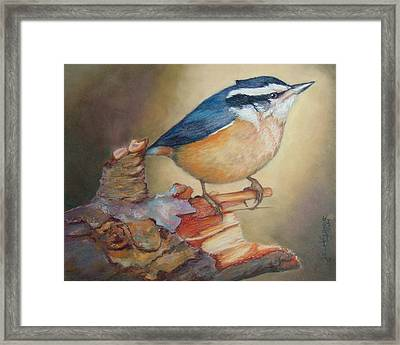 Red-breasted Nuthatch Bird Framed Print