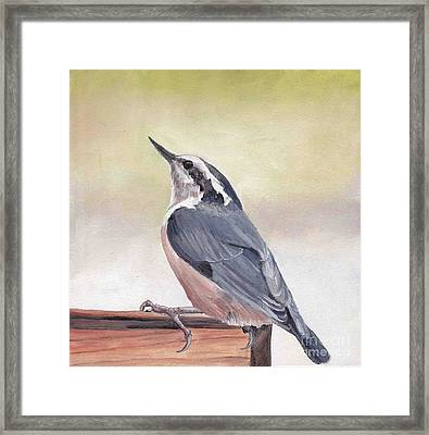 Red Breasted Nuthatch Framed Print by Charlotte Yealey