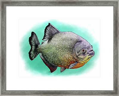 Red Breasted Piranha Framed Print
