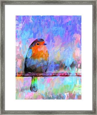 Red Breasted Robin Framed Print by Kenny Francis