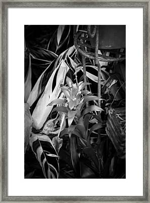 Red Bromeliad And Tricolor Gingers Bw Framed Print