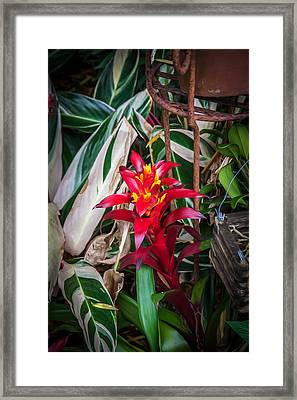 Red Bromeliad And Tricolor Gingers Framed Print