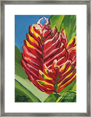 Red Bromeliad Framed Print