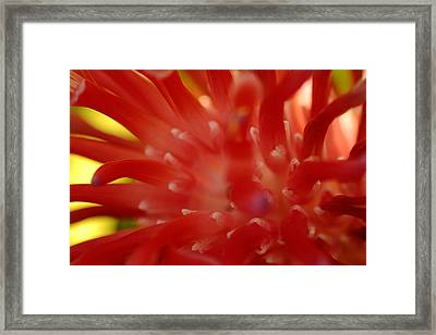 Framed Print featuring the photograph Red Bromeliad by Greg Allore