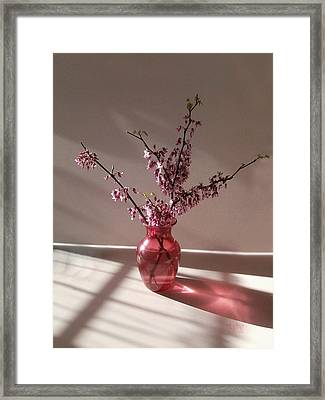 Red Bud And Rose Glass Framed Print by J R Baldini Master Photographer