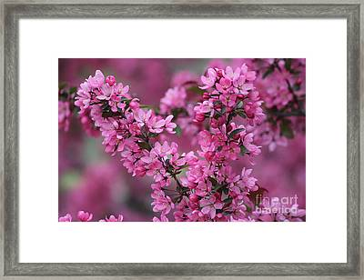 Red Bud Blossoms Framed Print by Theresa Willingham