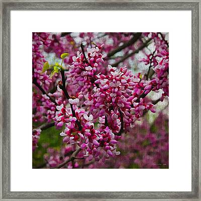 Red Bud On Canvas Framed Print by Tom Culver