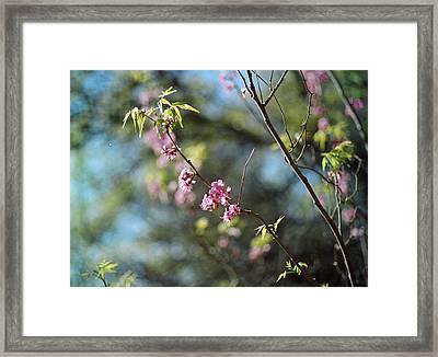 Red Buds In Bloom Framed Print by Linda Unger