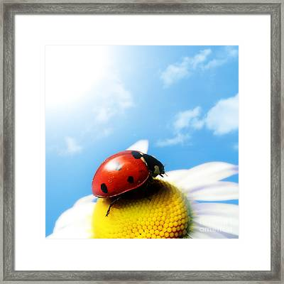 Red Bug On Camomile Flower Framed Print