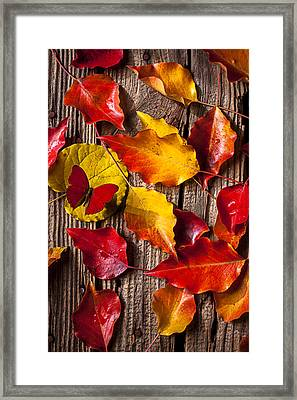 Red Butterfly In Autumn Leaves Framed Print by Garry Gay