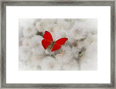 Red Butterfly On Flower Fluff Framed Print by Garry Gay
