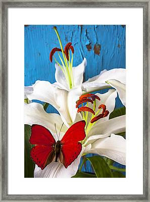 Red Butterfly On White Tiger Lily Framed Print